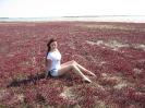 Необычная трава