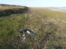 Пластиковые бутылки на берегу