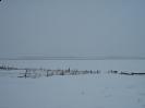 Зимнее озеро Чаны